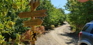 Chestnut forest of Agiasos